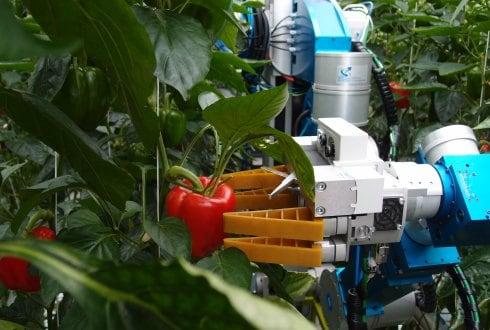 Diseñan un robot capaz de recolectar manzanas con la eficacia de decenas de humanos.