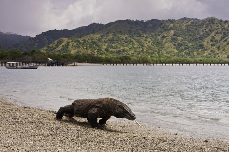 isla de indonesia