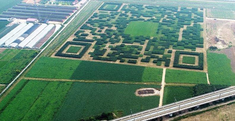 Un pueblo chino crea un código QR con árboles