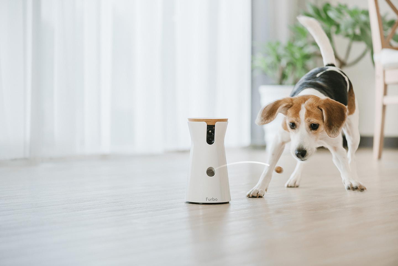 Una cámara permite jugar con los perros a distancia