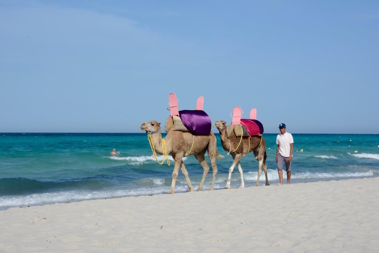 Experiencias en Túnez para ir con niños