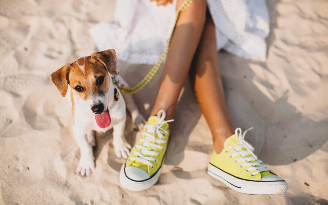 10 mejores playas para viajar con perros en España